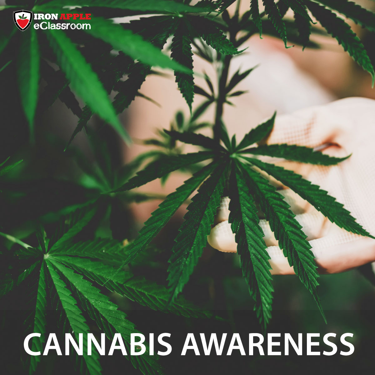 Cannabis Awareness Training by Iron Apple eClassroom